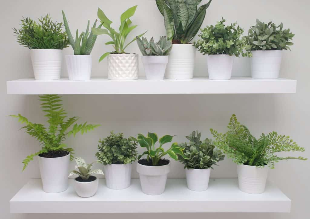plant wall on Ikea shelves
