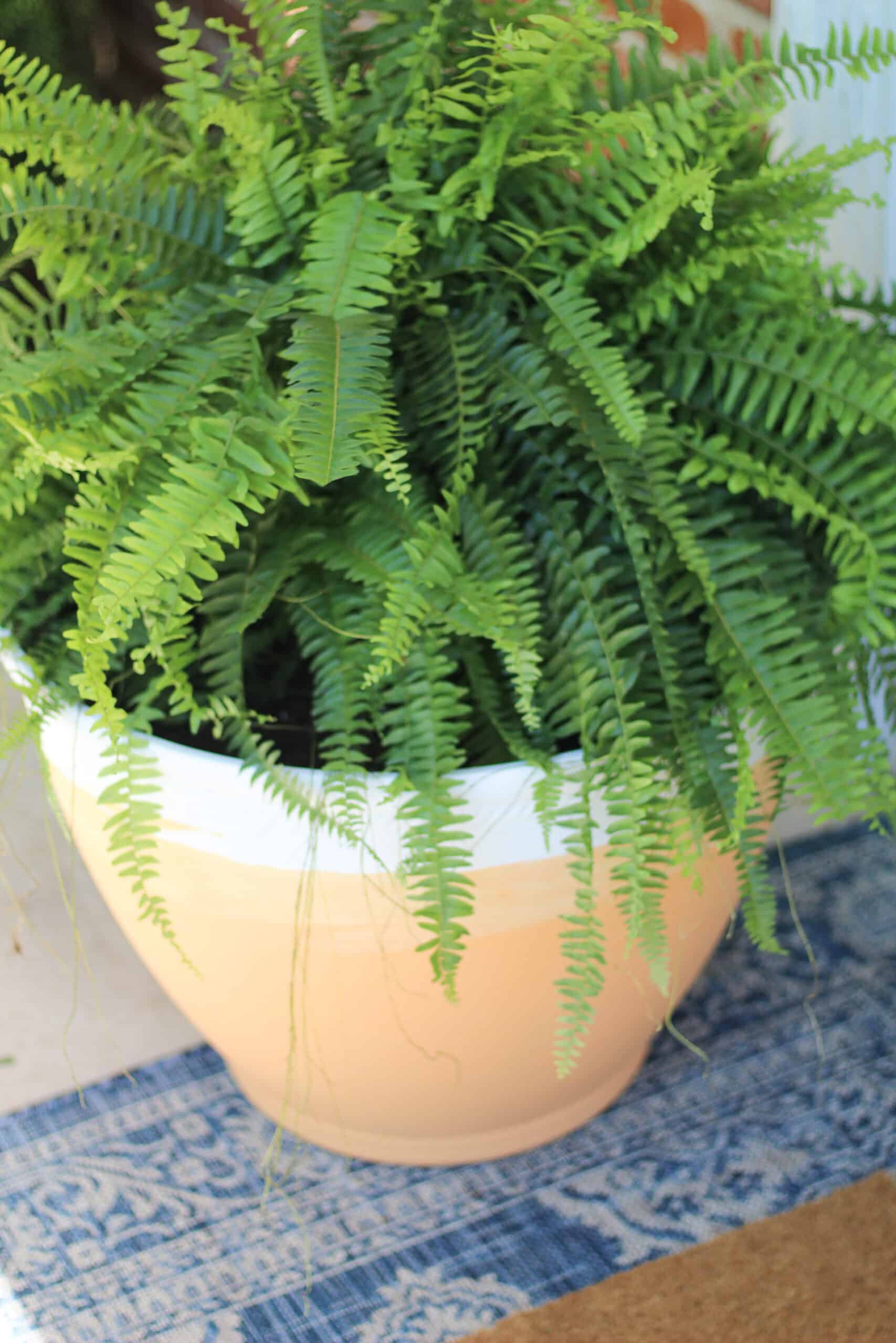 DIY Terracotta Pot