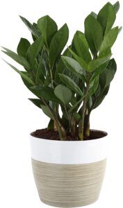 small potted plant from Amazon