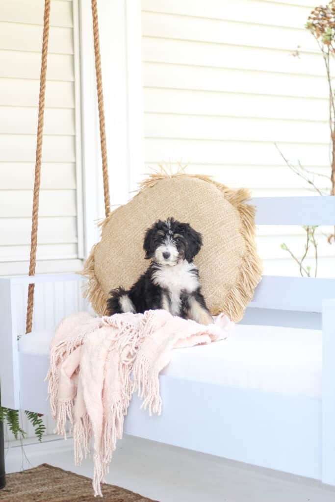 Porch swing with bernedoodle puppy on it