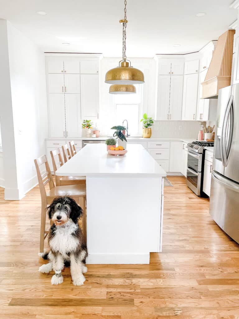 The best way to get rid of dog  smell from house